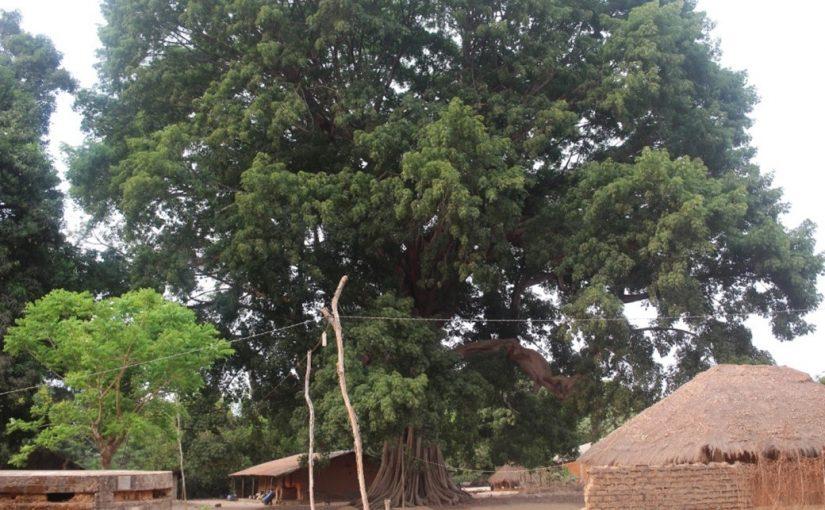 Dia Internacional da Floresta (21 de março)