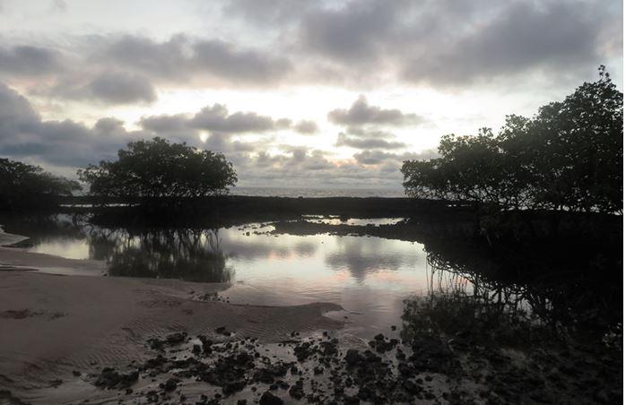 Dia Mundial de Conservação da Natureza (28 de julho)